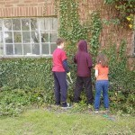 d juniors clearing ivy